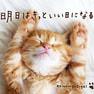 【CD】明日はきっといい日になる